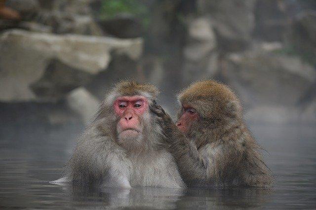 サル山 温泉